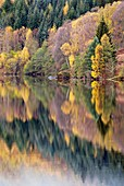 Forest reflected in a loch