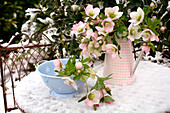 Hellebore flowers in snow