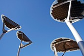 Solar Mallee Trees