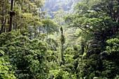 Dense trees in jungle