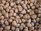 Walnuts (juglans regia) for sale