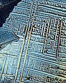 Urea crystals,light micrograph