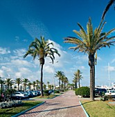 Pavement lined with palm trees,Spain