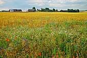 Rural landscape,Sweden