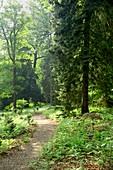 Enchanted Wood,Belvoir Castle