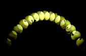 Bouncing ball,stroboscope image
