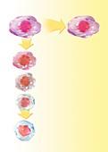 Stem cell development,artwork