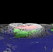 Hurricane Erin,3-D computer image