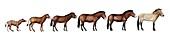 Evolution of Przewalski's horse,artwork