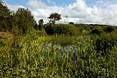 Braunton Burrows biodiversity site