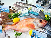 Ocean perch on a fish counter