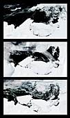 Mertz Glacier Tongue calving,2010