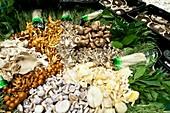 Edible fungi at a market