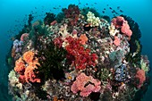 Tropical reef,Indonesia