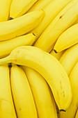 Bananas (Musa accuminata)