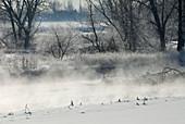 Evaporation fog rises over a river