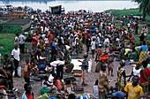Congo bushmeat market