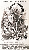 Darwin caricature,Punch magazine