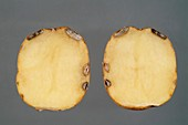 Charcoal rot in a potato