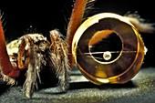 Laser Megajoule target and spider