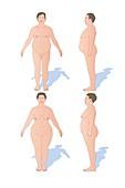 Body shapes,artwork