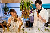 Plant genetics research