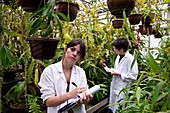 Pitcher plant research