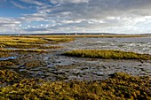 Keyhaven Marshes Nature Reserve