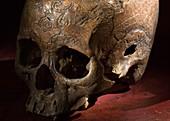 1800's Carved dayak skull lethal wound