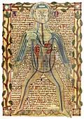 Circulatory system,17th century
