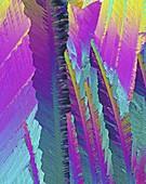 Caffeine crystals,light micrograph