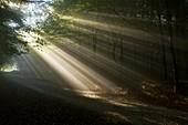 Morning Mist,Romania