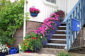 Flowers on porch stairs