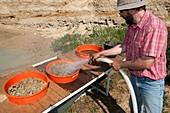 Palaeontological excavation,France
