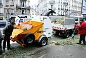 Recycling Christmas trees,Paris