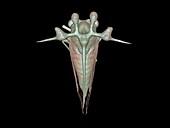 Leafhopper,3D reconstruction