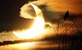 Partial solar eclipse,January 2011
