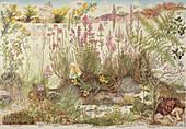 Heathland plants,poster