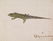 Lizard,artwork
