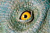 Animatronic dinosaur eye