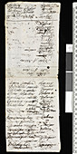 Robert Brown's expedition notes,1803