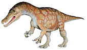 Baryonyx dinosaur model