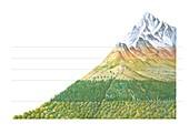 Vegetation altitude zones
