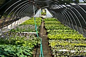 Horticultural greenhouse