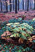 West Woods,Wiltshire,UK