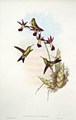 Hummingbirds,artwork