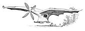 Ader's flying machine,19th century