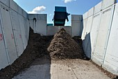 Wood for biomass power plant