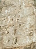 Laetoli fossil footprints