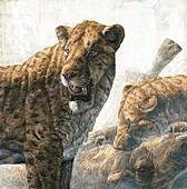 Homotherium scimitar cats